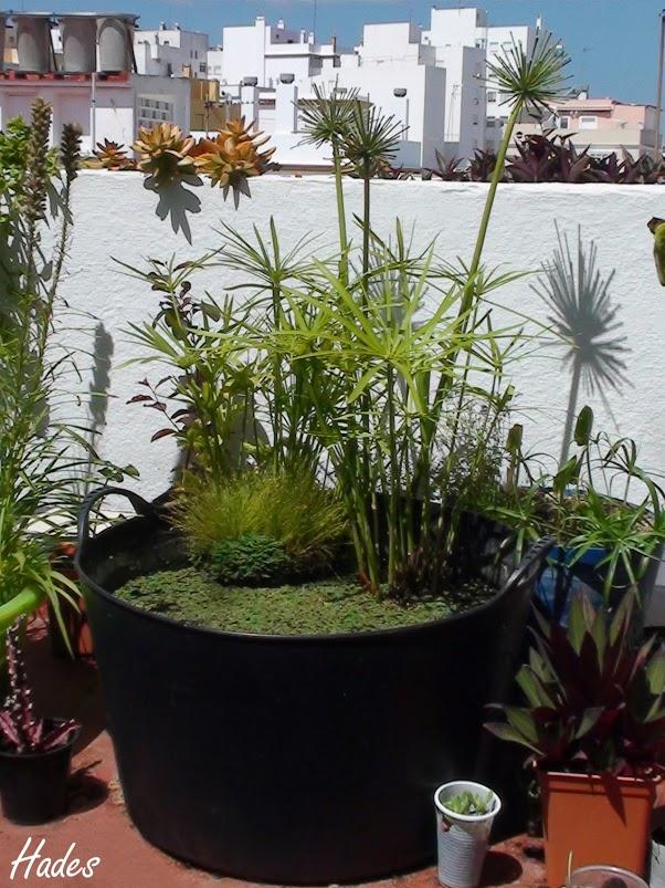 Rana en estanquitos de la terraza puedo tener salta a for Estanque con neumatico
