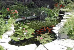 estanque-plantas.jpg