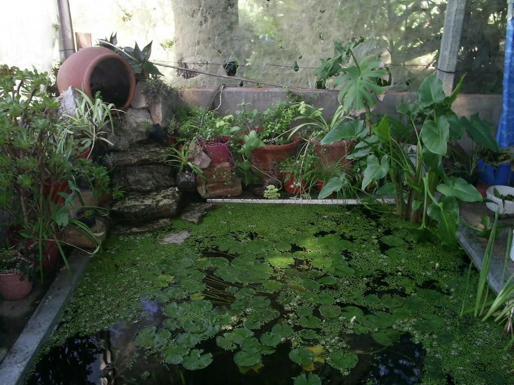 estanque012.jpg