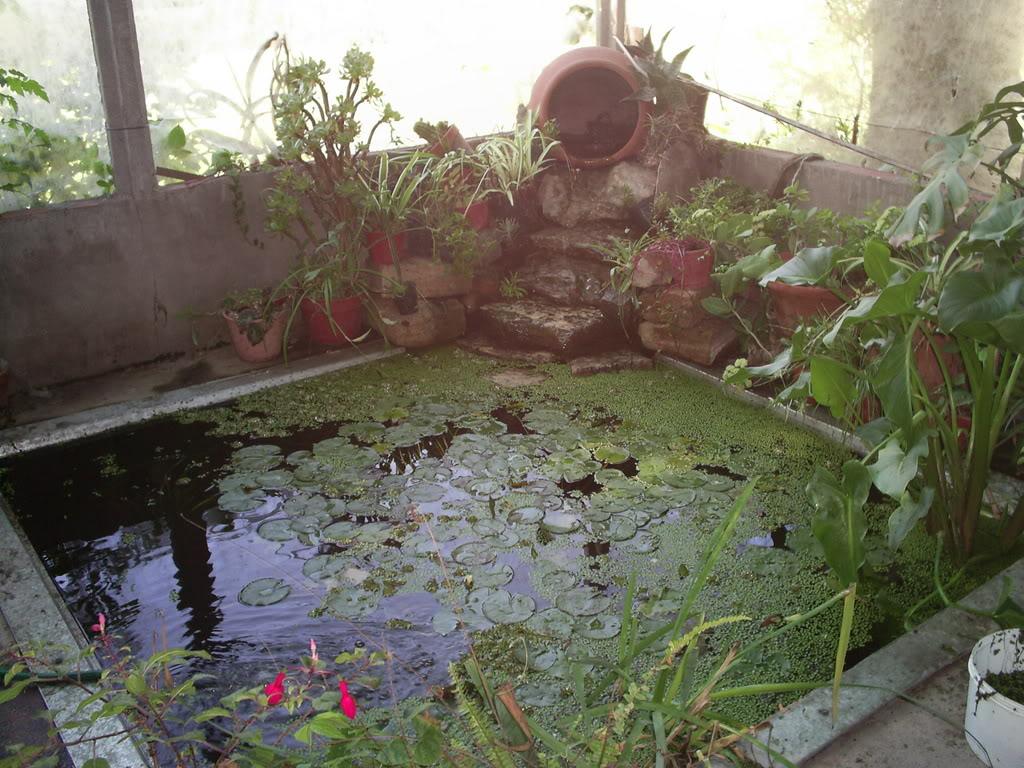 estanque013.jpg