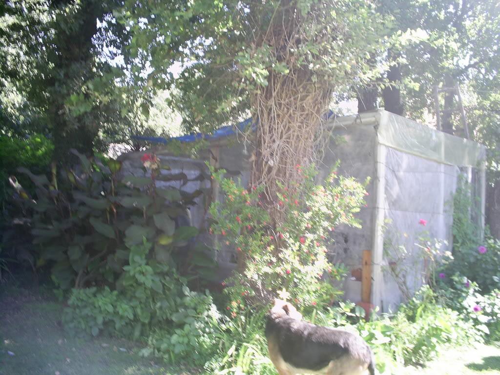 estanque016.jpg