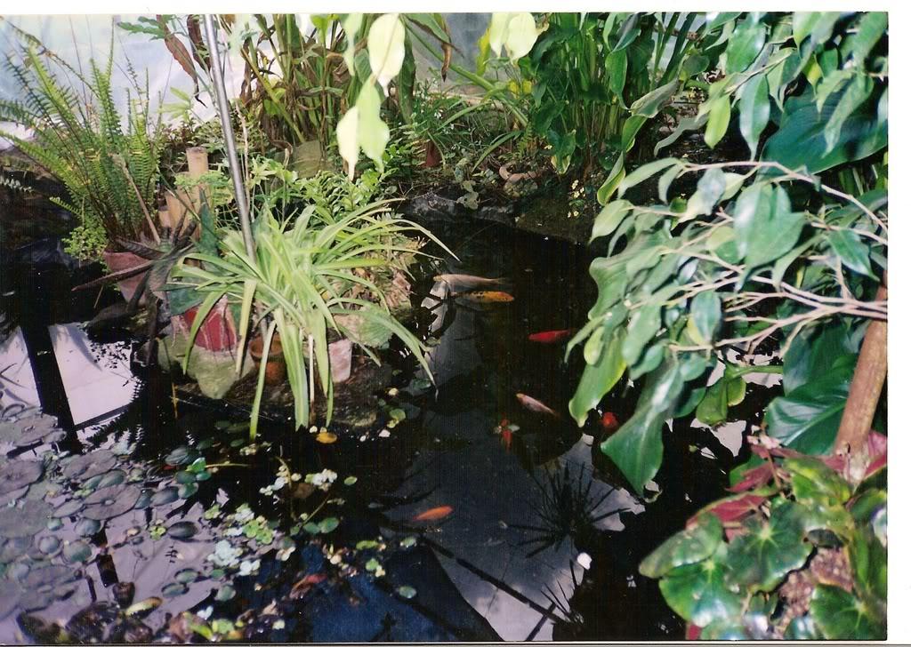 estanque026.jpg