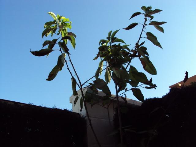 ESTANQUE04-08-2011041.jpg