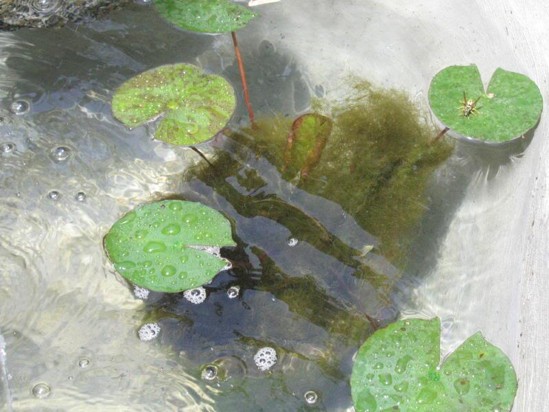 estanque2005_0002_1b.jpg