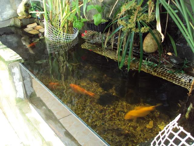 Fotos de estanque de gloria y agust n casi terminado for Estanques pequenos para tortugas