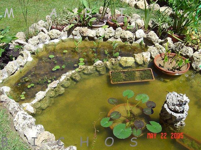 Estanque de mari bichos for Estanques para agua
