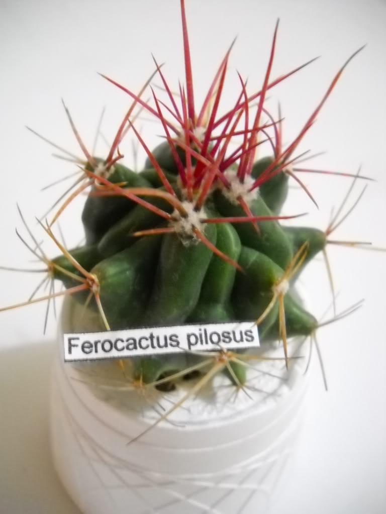 feropilosus.jpg