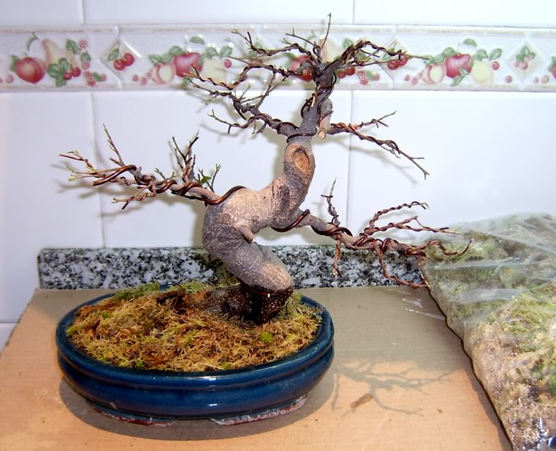 Ficuspodado.jpg