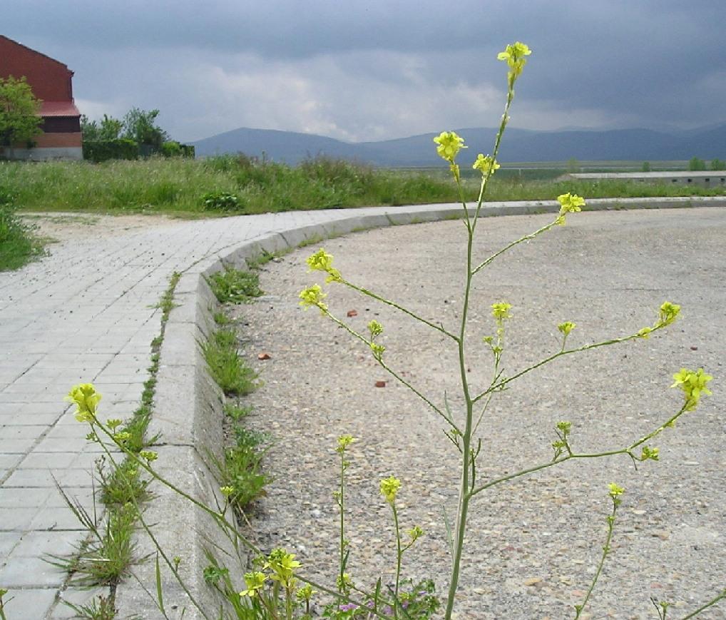 Flor%20desco.jpg