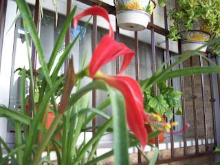 flor+lis+1.jpg