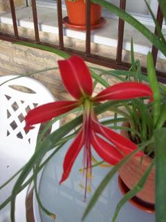 flor+lis+2.jpg