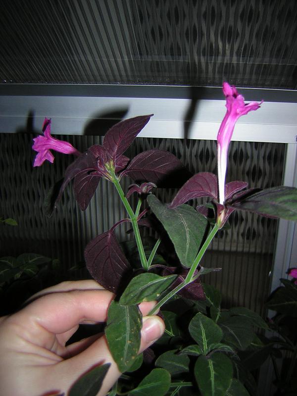 flor planta boda Cristina.JPG