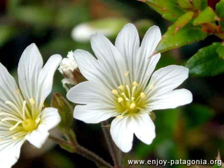 flora-serastio-01.jpg