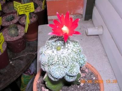 floraciones_002.jpg