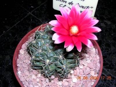 floraciones_004.jpg