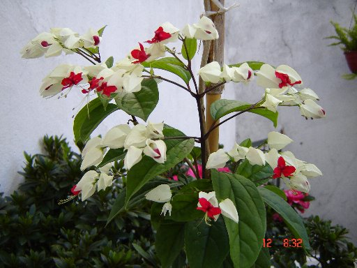 floraidentificar.jpg