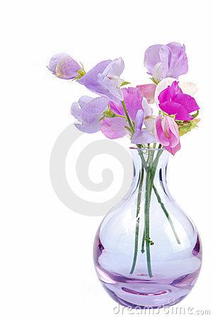 florero-de-flores-del-guisante-dulce-thumb2842084.jpg