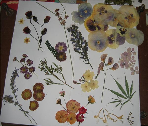 flores%20f.jpg