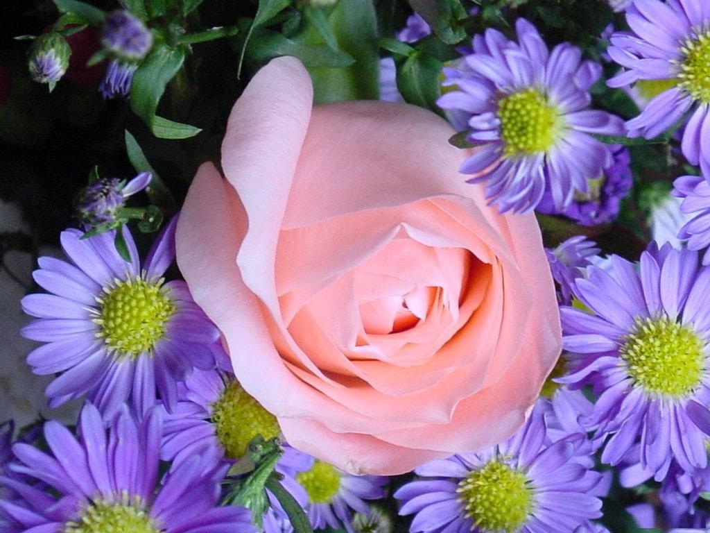 flores-frescas.jpg