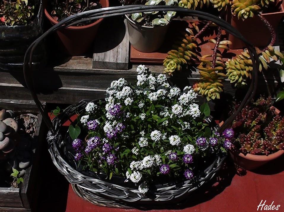 flores+lilas+cesta.jpg