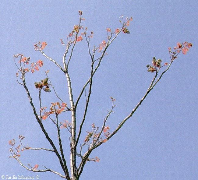 floresmundani1.jpg