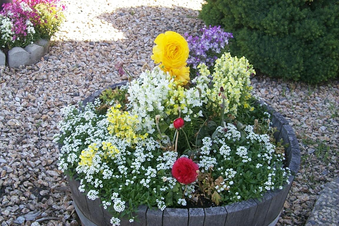 flower-barrel-3-2005.jpg