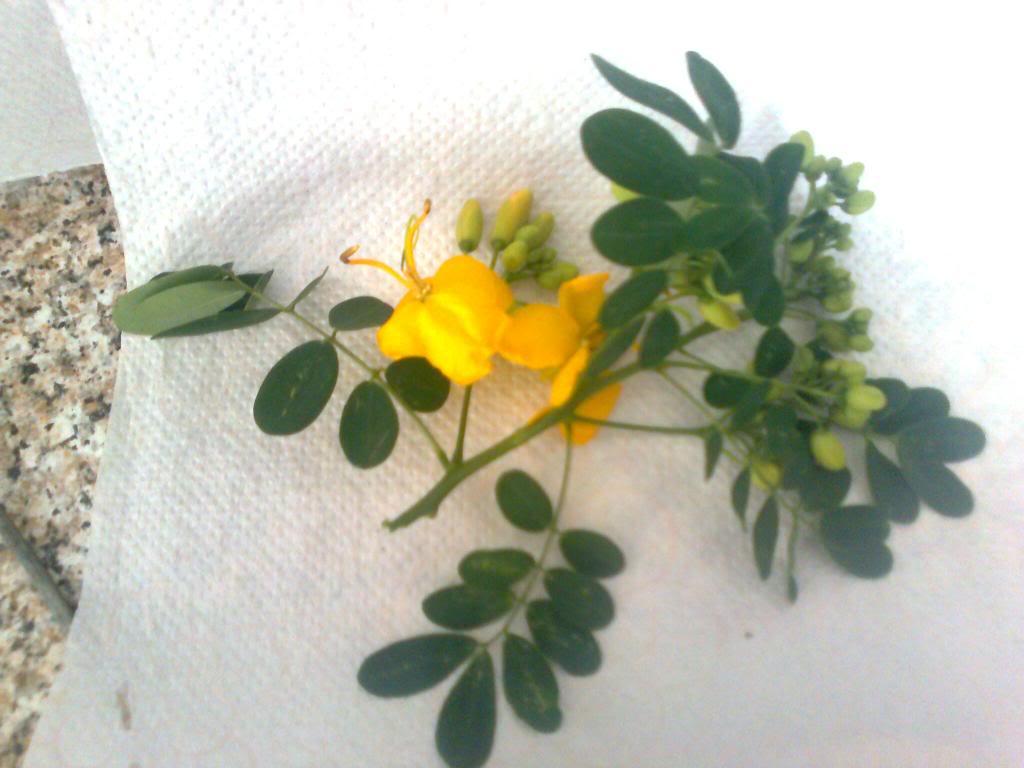 Identificación de una de familia leguminosas y otra cosa rara