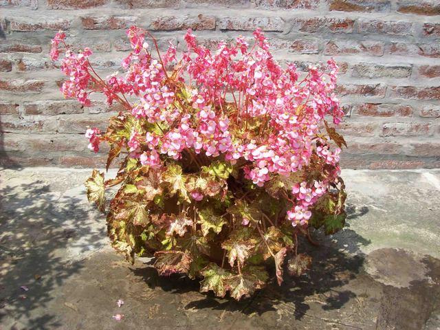 Foto_1405_26-10-2008_00_10.jpg