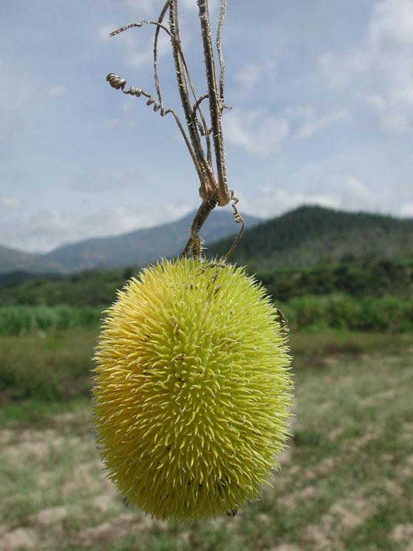 fruto3.jpg