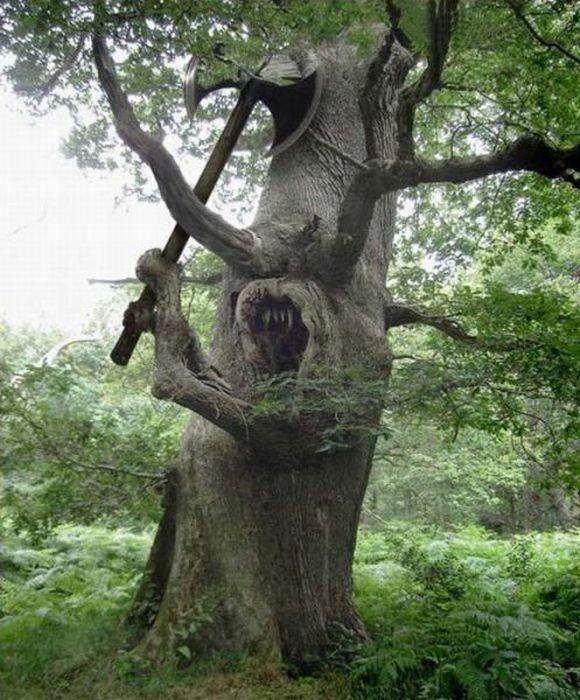 Funny-Tree-17.jpg