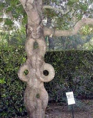 funny+tree+6.jpg