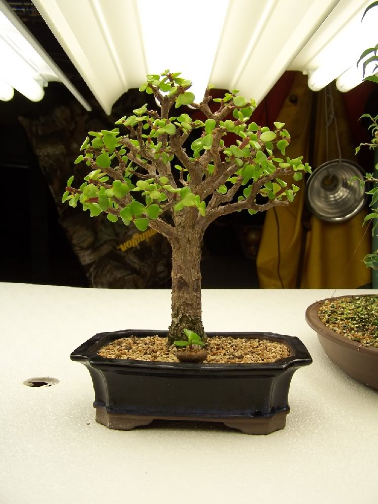 GardenAug1048.jpg