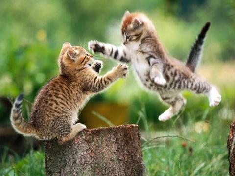 gatos_peleando.jpg