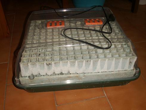 germinador2.JPG