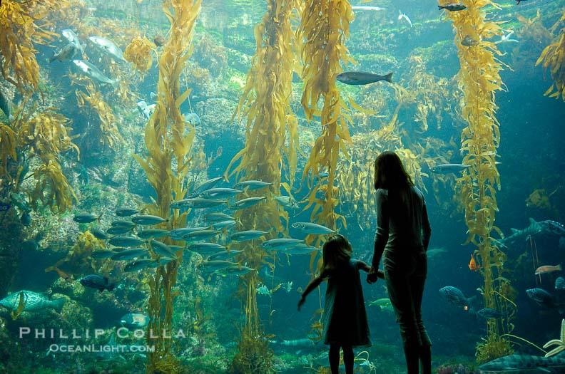 giant-kelp-birch-aquarium-la-jolla-photo-10308-877695.jpg