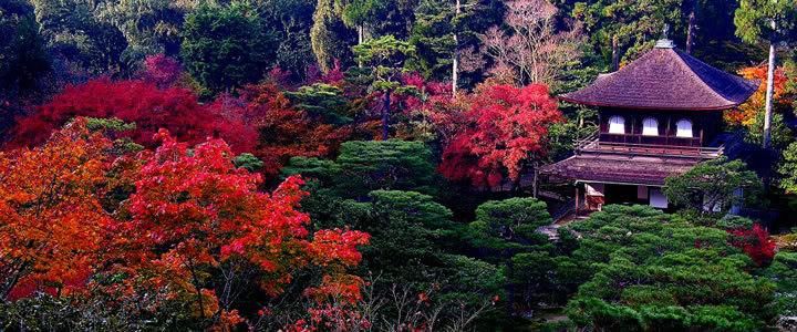 Jardines japoneses fotos - Fotos jardines japoneses ...