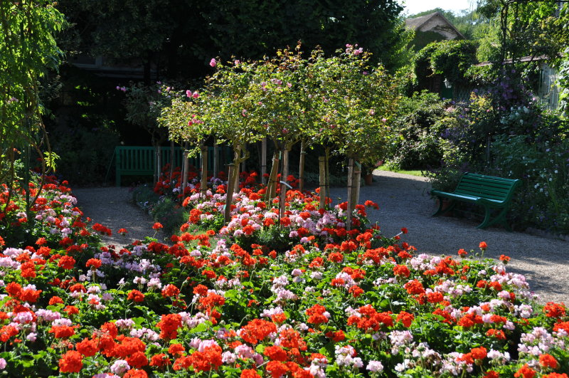 giverny-pelargonium.jpg