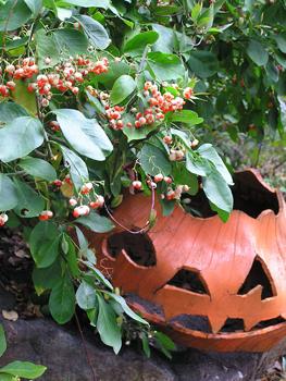 halloweeneuonymusfelder.jpg