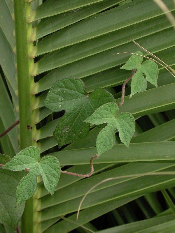 hojas-sobre-palma.jpg