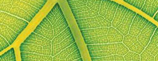 hojasartificiales.jpg