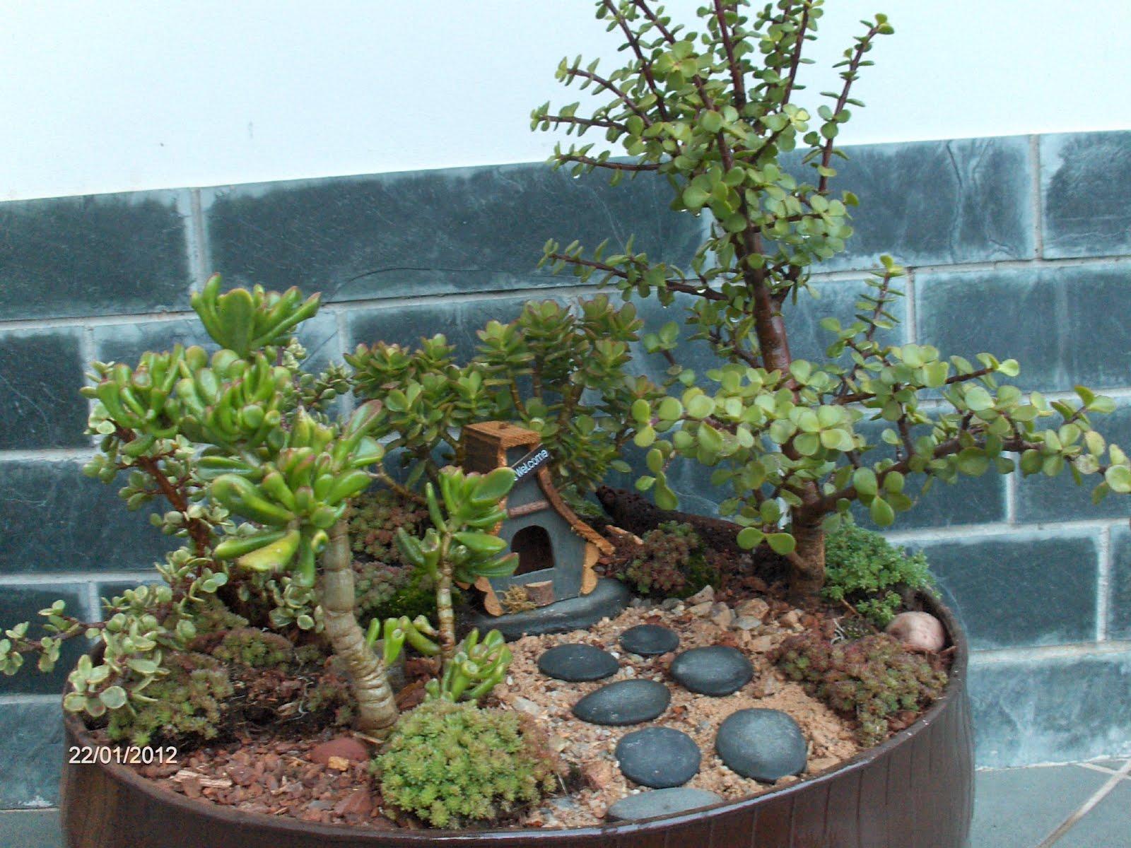 Jardines en miniatura p gina 5 for Jardines en miniatura