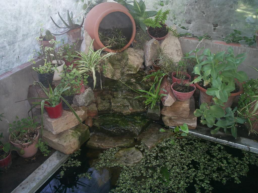 Qu plantas pongo en estanque peque ito en patio for Como oxigenar el agua de un estanque sin electricidad