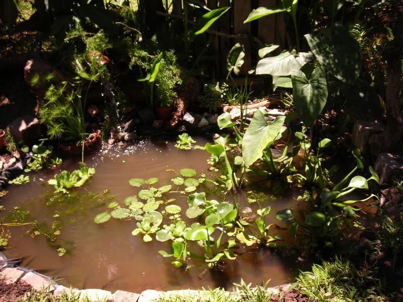 Fotos de mi estanque de lona for Lona estanque barata