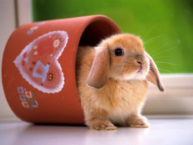 imagenes-conejos-g.jpg