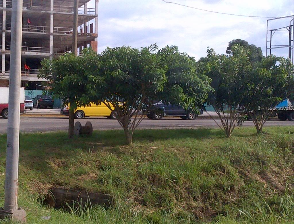 IMG-20121030-01039_zps5f9cba57.jpg