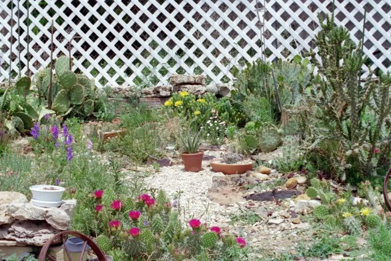 Mi patio trasero jard n de cactus - Jardines con cactus y piedras ...