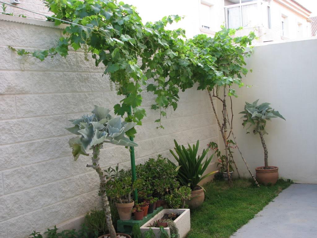 P rgola de las que venden en carrefour o similar aguanta for Jardines pequenos horizontales