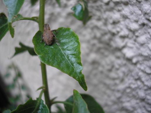 insecte%204.JPG
