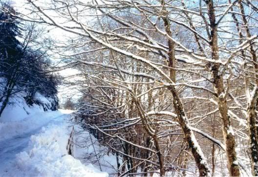 invernoinaspromonte.jpg