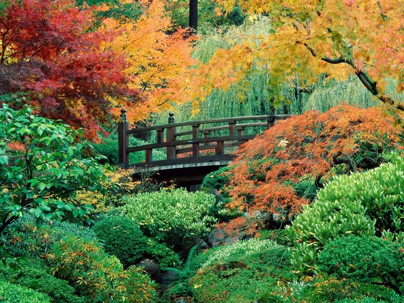 JapaneseGardenWashingtonParkPortlan.jpg